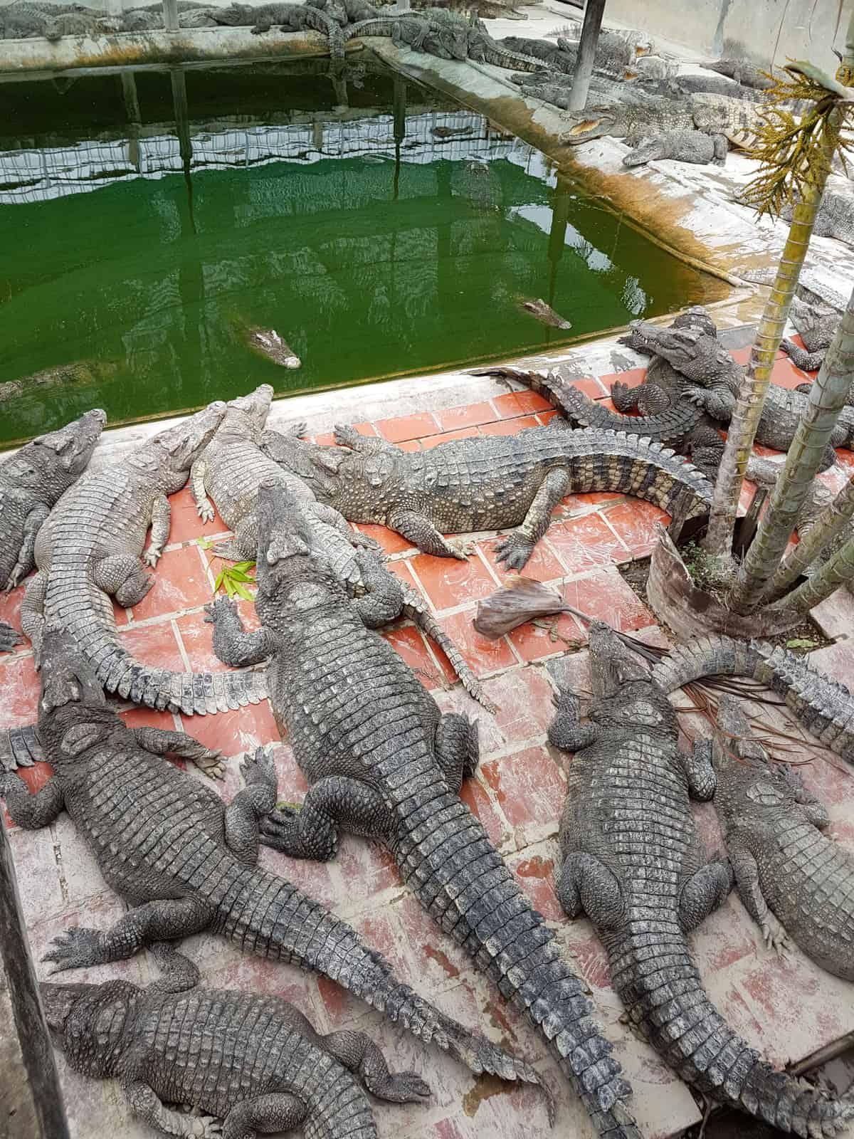 Crocodile Farm Battambang