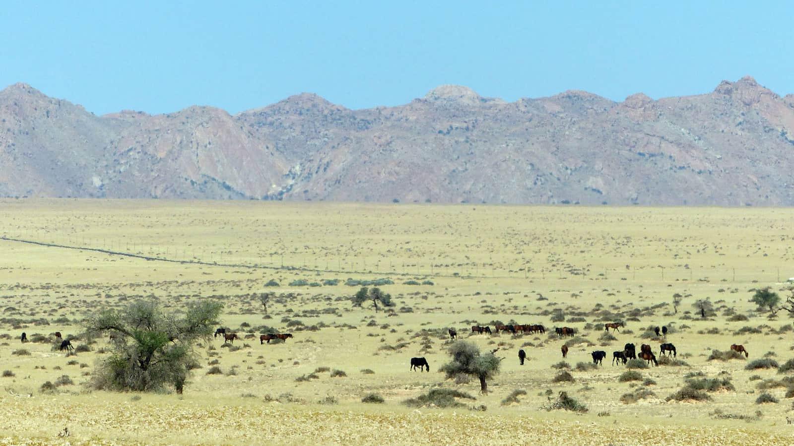Wild Horses near Aus, Namibia