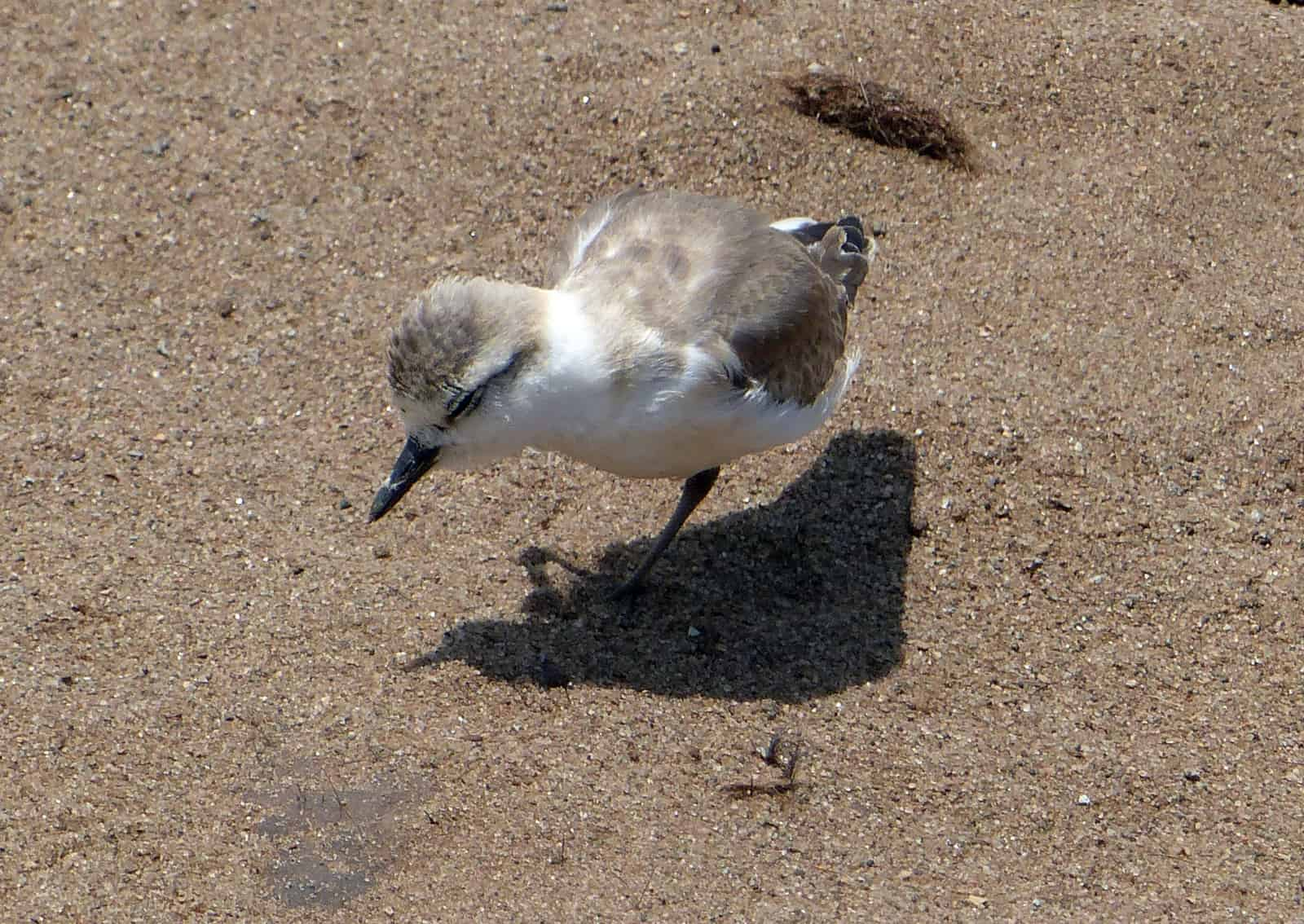 Cape Cross Bird