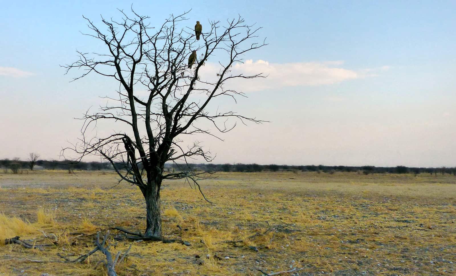 Eagles at Etosha National Park