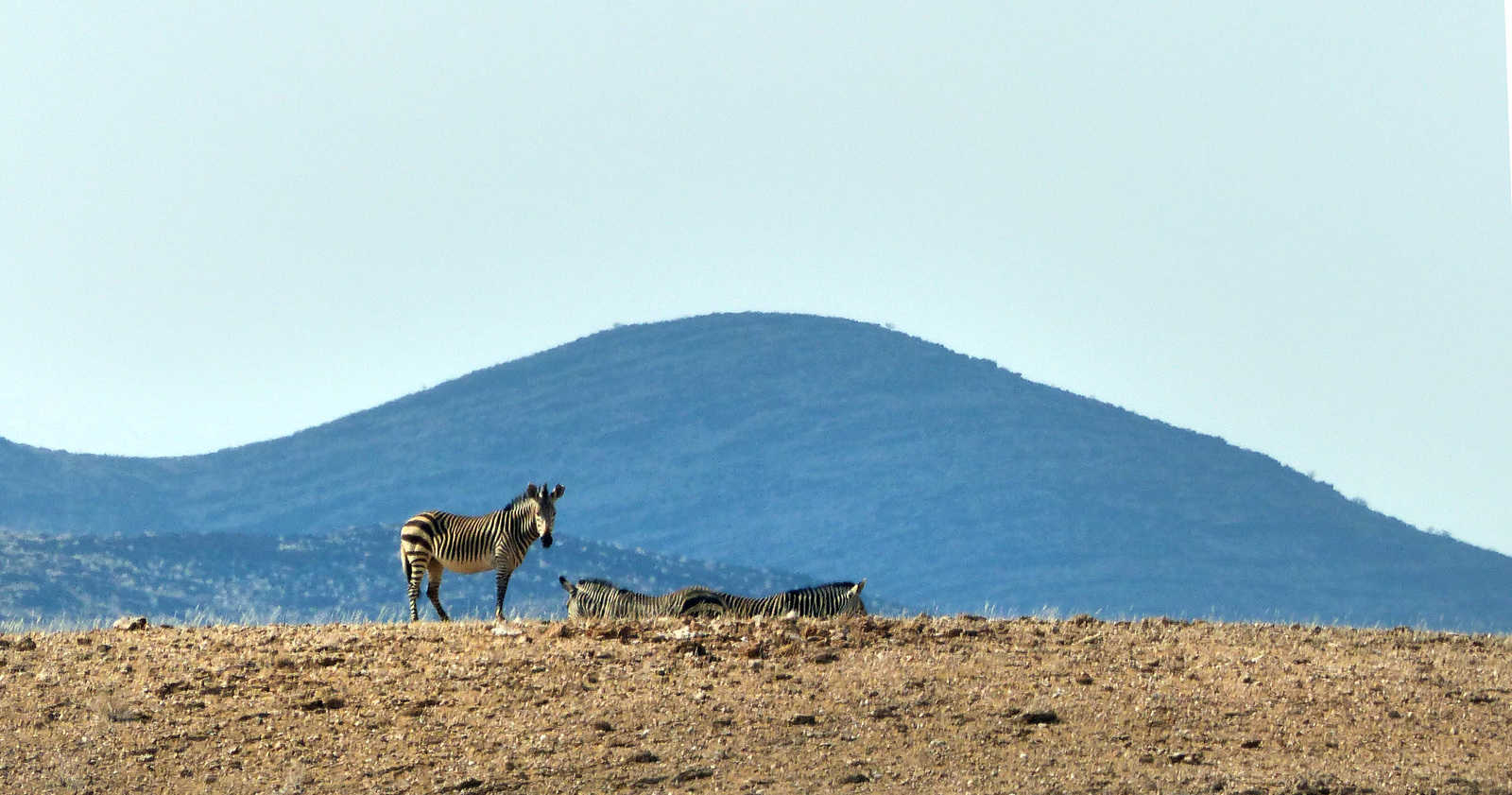 Mountain Zebra, Namibia