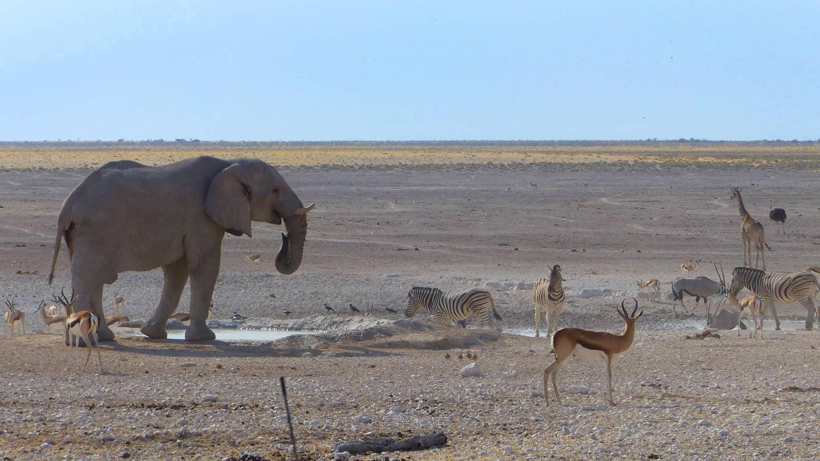 Animals at Nebrowni Waterhole in Etosha