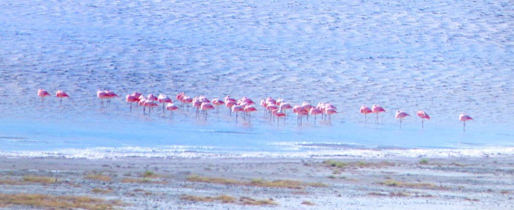Flamingos at Pali Aike National Park